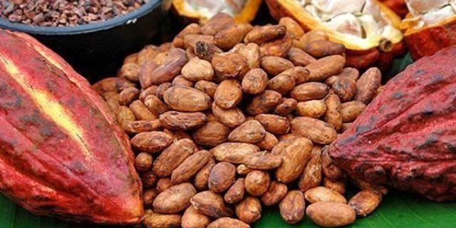 Kakao-atau-Kokoa-Apa-Bedanya