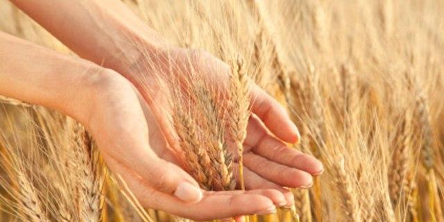 Apa-itu-Wheat-Germ